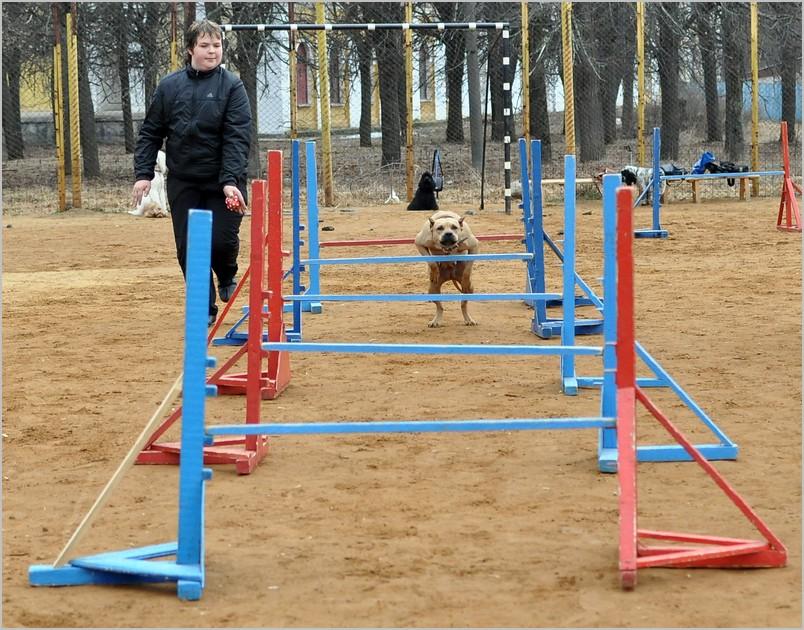 Как сделать барьеры для собак - Vingtsunspb.ru